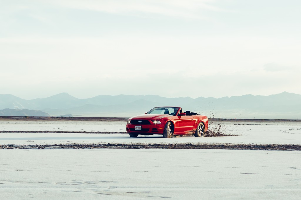 mustang in motion