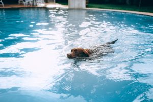 a dog swimming