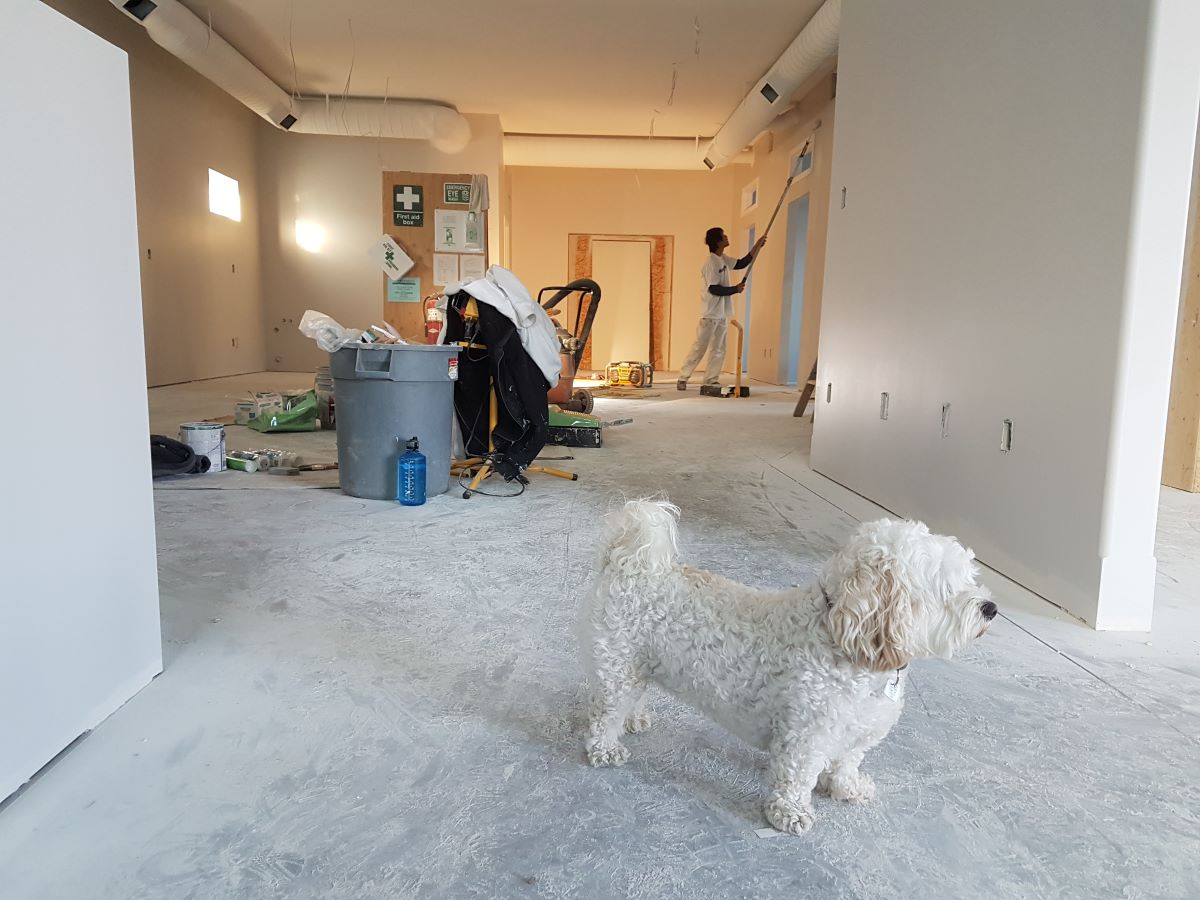 home renovation with dog in the foreground